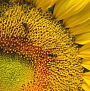 Busy Sunflower Art Print