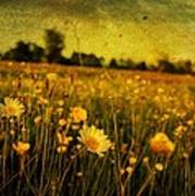 Buttercup Meadow Art Print