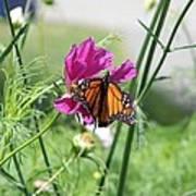 Butterflies Fly Art Print