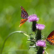 Butterflies On Thistles Art Print