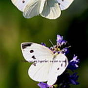 Butterfly - Cabbage White - As One Art Print
