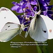 Butterfly - Dueteronomy 31 6 Art Print