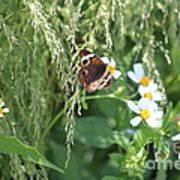 Butterfly 11 Art Print