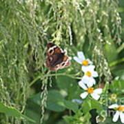Butterfly 13 Art Print