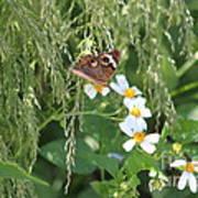 Butterfly 15 Art Print