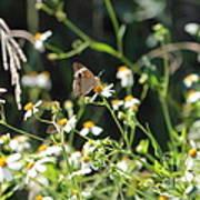 Butterfly 17 Art Print