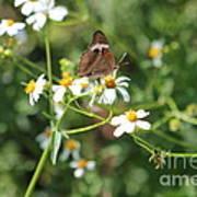 Butterfly 24 Art Print