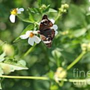 Butterfly 25 Art Print