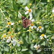 Butterfly 30 Art Print