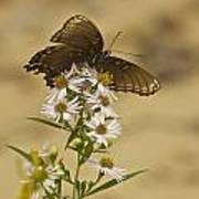 Butterfly 3321 Art Print