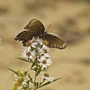 Butterfly 3322 Art Print