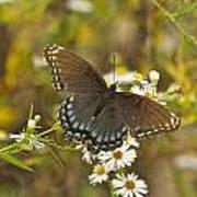 Butterfly 3325 Art Print