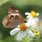 Butterfly 39 Art Print