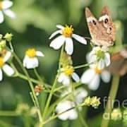 Butterfly 44 Art Print