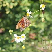 Butterfly 46 Art Print