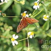 Butterfly 48 Art Print