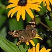 Butterfly 94 Art Print