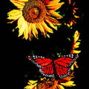 Butterfly And Sunflower Art Print