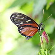 Butterfly At Rest Art Print