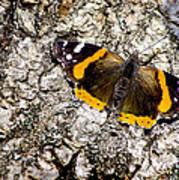 Butterfly Bark Art Print