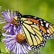 Butterfly Blessing Art Print