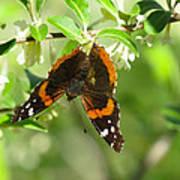 Butterfly Buds Art Print
