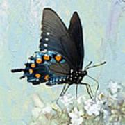Butterfly Candy Art Print