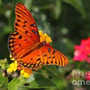 Butterfly Diaries IIi Art Print