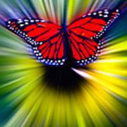 Butterfly Fly Art Print