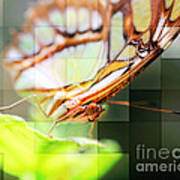 Butterfly Frosted Glass Art Print