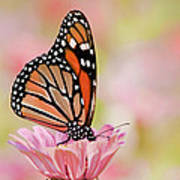 Butterfly Garden IIi Art Print