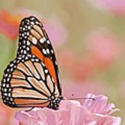 Butterfly Garden Iv Art Print