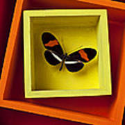 Butterfly In Box Art Print