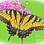 Butterfly In Candyland Art Print