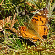 Butterfly In The Forest Art Print