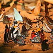 Butterfly Menagerie Art Print