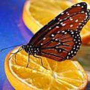 Butterfly Nectar Art Print