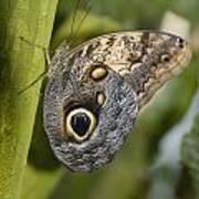Butterfly On A Green Branch Niagara Art Print