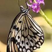 Butterfly On A Stem Art Print