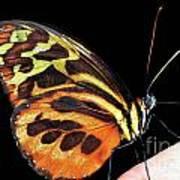 Butterfly On Finger Art Print