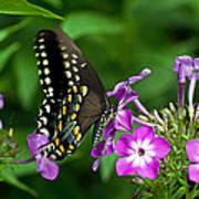 Butterfly On Purple Art Print