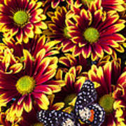Butterfly On Yellow Red Daises  Art Print