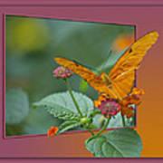 Butterfly Orange 16 By 20 Art Print