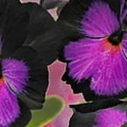Butterfly Pansies Art Print