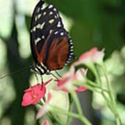 Butterfly Perch Art Print