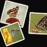 Butterfly Picture Page Collage Art Print