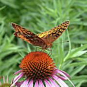 Butterfly Pitstop Art Print