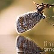 Butterfly Reflection Art Print