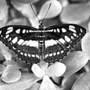 Butterfly Study #0061 Art Print
