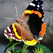 Butterfly Tai Chi On Lantana Luscious Lemonade Art Print